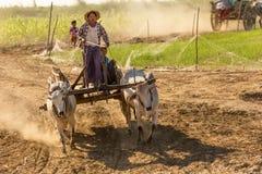 Birmańscy ludzie jedzie oxcart Fotografia Royalty Free