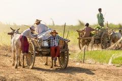 Birmańscy ludzie jedzie oxcart Fotografia Stock