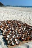 Birma. Shells van de kokosnoot het Drogen Royalty-vrije Stock Foto