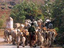 Birma. Vee en Herders Stock Afbeelding