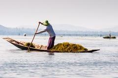 Birmaanse landbouwer op Inle-Meer stock afbeelding