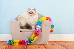 Birman cat birthday Royalty Free Stock Image