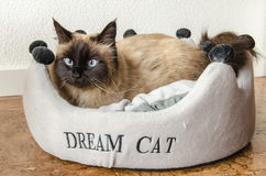 Birman cat. Lies down in a basket royalty free stock photography