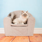 Birman-Katze im Stuhl stockfoto