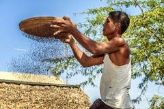 Birmanischer Landwirt siebt Körner Lizenzfreies Stockfoto