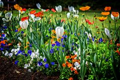 Birmingham AL Flowers em um ângulo fotos de stock royalty free