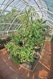 Birmingham botanical gardens Royalty Free Stock Photos