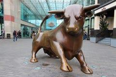Birmingham Bull Royalty Free Stock Photos
