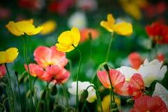 birmingham ogrody botaniczne zdjęcie stock