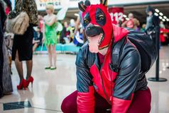 Cosplay as Marvel Comics charater Dogpool Royalty Free Stock Image