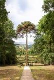 Birne, die vom Baum hängt stockfotografie