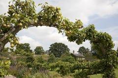Birnen-Bogen im Häuschen-Garten Stockbild