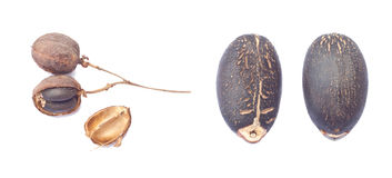 Birnen und Samen von Arznei-Nüssen stockfotografie
