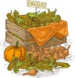 Birnen-Zwiebel, reife Kürbise und Holzkiste mit Mais Lizenzfreie Stockfotos