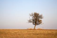 Birnenbaum in der Wiese im Herbst Lizenzfreie Stockfotografie
