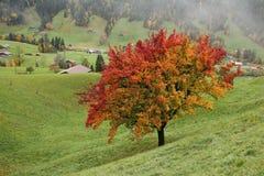 Birnenbaum im Herbst Lizenzfreie Stockfotos