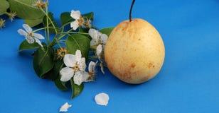 Birnenblüte und Birne lizenzfreie stockbilder