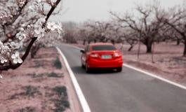 Birnenblume im April Stockbilder