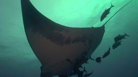 Birostris и водолазы Manta морского дьявола в El Boilier трясут около острова Sanbenedicto от архипелага Revillagigedo видеоматериал
