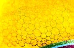 Birra della bolla Fotografia Stock