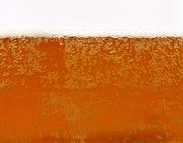 Birra di recente servita Immagine Stock Libera da Diritti