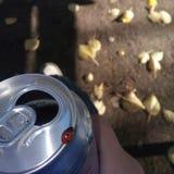 Birra e selvaggio Immagini Stock Libere da Diritti