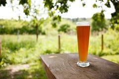 Birra fresca del frumento Immagine Stock