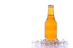 Birra isolata fresca Fotografia Stock Libera da Diritti