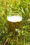 Birra nell'erba Immagine Stock