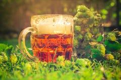 Birra piena dei coni di luppolo dei boccali con coperchio Fotografie Stock Libere da Diritti