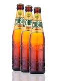 Birra premio della cobra su un fondo bianco Fotografie Stock