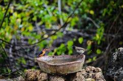Birtds prenant un bain photos libres de droits