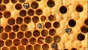 Birth of bees stock footage