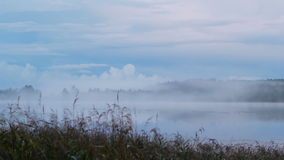 Birth of fog on the lake Stock Image