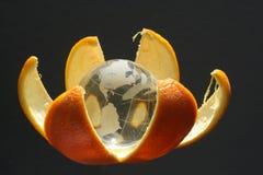 Birth of globe. Glass globe in orange skin Stock Image