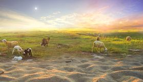 The Birth of Jesus: Three PhDs See the Stars and Shepherd Shepherds royalty free stock image