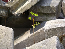 Birth in a landfill. Garbage of concrete, young plant growing in it Royalty Free Stock Photos