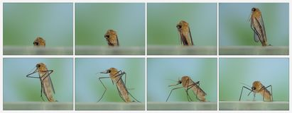 Birth mosquito Series Stock Photos