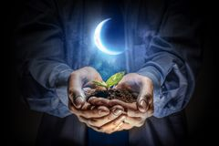 Birth of new life. Close of businessman holding green seedling in palms royalty free stock photography