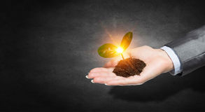 Birth of new life. Close of female hand with green sprout growing in soil royalty free stock image