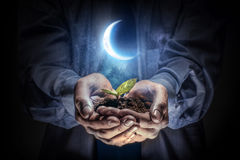 The birth of new life. Close up of businessman hands with sprout in palms royalty free stock images