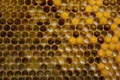 Birth of a new life in the colony of bees Royalty Free Stock Photos