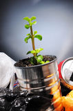 Birth of a plant from a can in the garbage Royalty Free Stock Photo