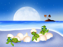 Birth of sea turtles Royalty Free Stock Photo