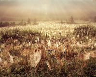 Birth of souls. Set of solar beams shine(cover) a field in an empire of spiders Stock Images