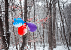 Birthday balloons hanging on the tree. In snowy forest stock images