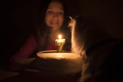 Birthday cake with a candle for a cat Stock Photos