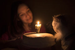 Birthday cake with a candle for a cat Royalty Free Stock Photo