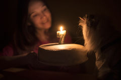 Birthday cake with a candle for a cat Stock Images