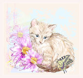 Birthday card with  kitten, butterfly and gerberas Royalty Free Stock Photography
